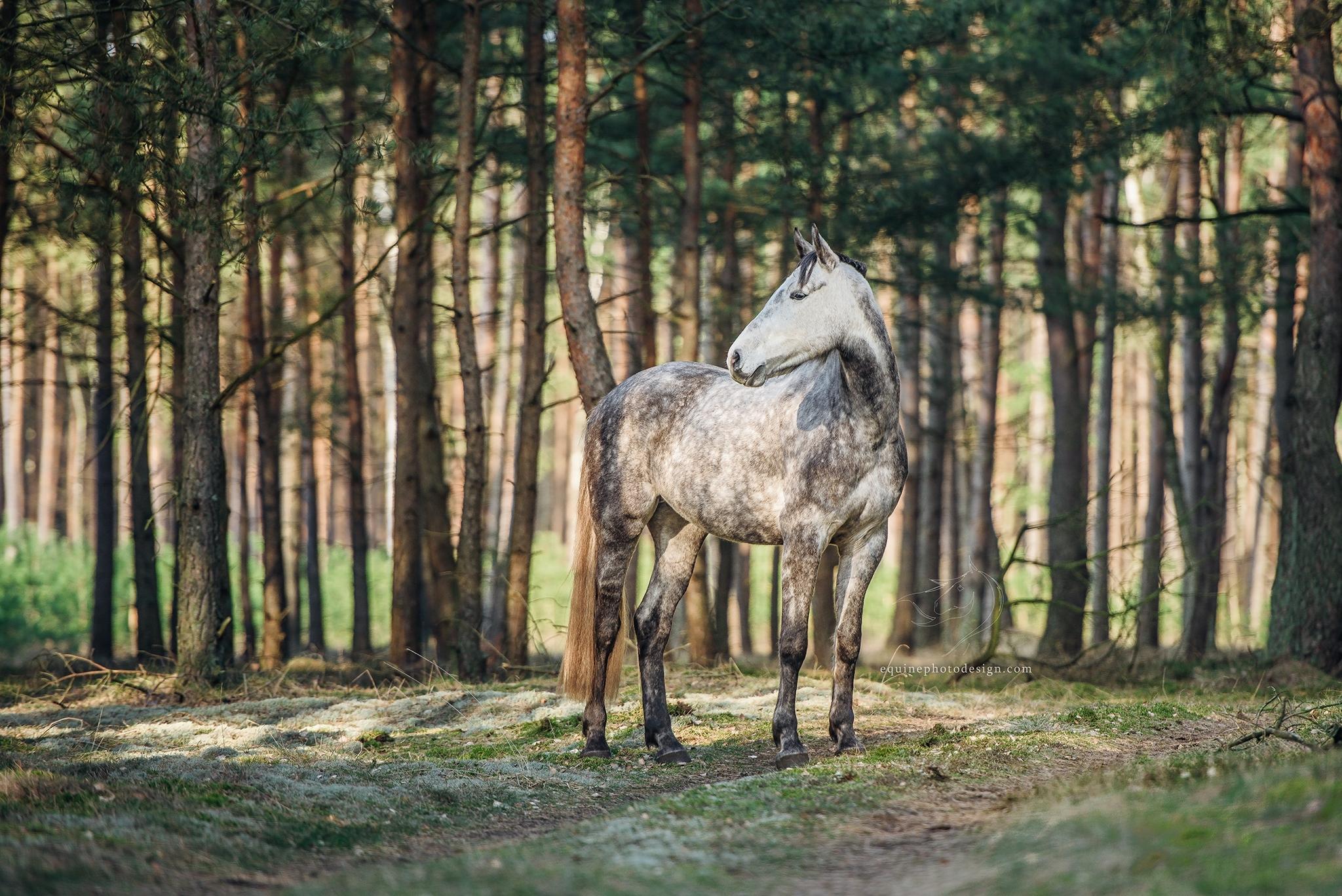 horse forest portrait Poland